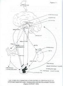 alimentation stress immunité