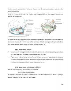grossesse auto-ostéopathie perinatalité