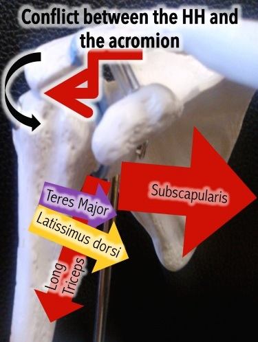 rotator-cuff-book-osteopathy-4