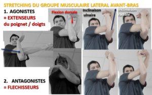 Stretching du groupe musculaire latéral de l'avant-bras. Les Agonistes = EXTENSEURS du poignet + doigts. Les Antagonistes = Fléchisseurs.